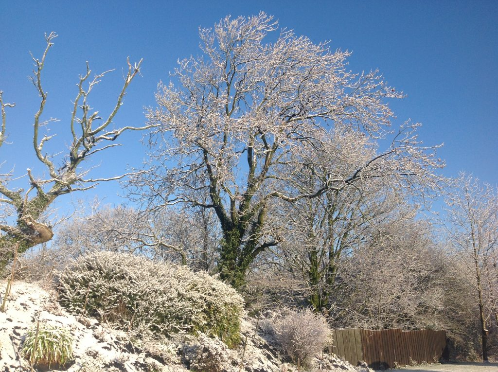Snow 23/1/19 very picturesque.